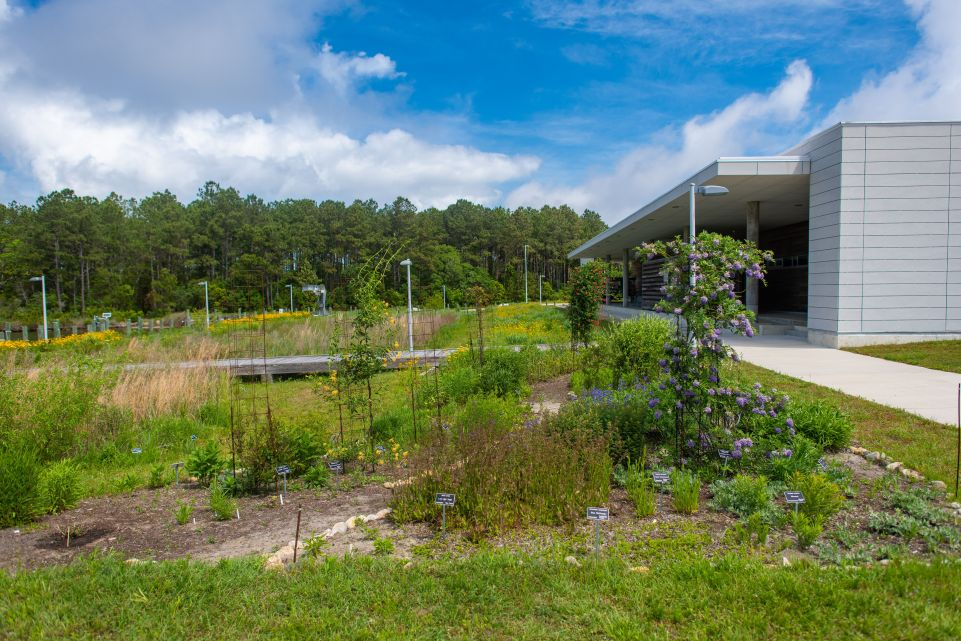 Coastal Gardening and Landscaping Provides Great Escape and Habitat Protection