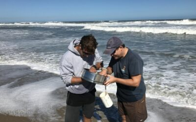 CSI, ECU Researchers Study Beach Nourishment Effects on Pea Island