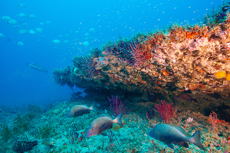 Study Shows Coral Reefs Provide Protection for Most Vulnerable People