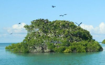 Land Conversion and Shoreline Erosion Battle for the Largest Contribution of Mangrove Loss