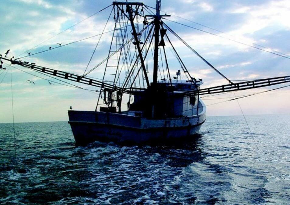CSI Biologist Awarded Funding for Fisheries and Climate Change Work